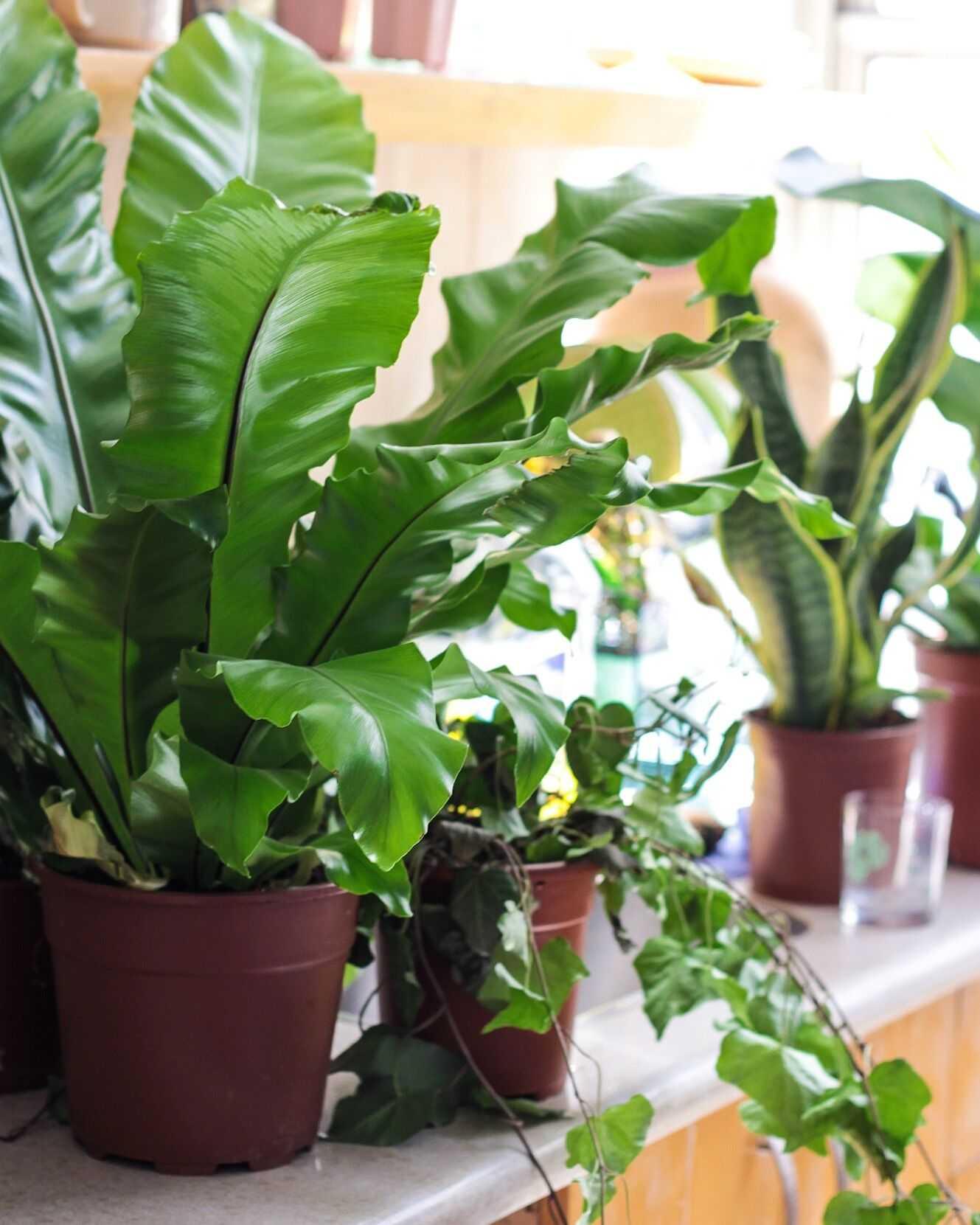 סיור היכרות עם הצמחים שלי